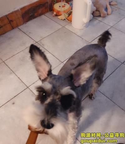 ,6月9号在邯郸市科贸城内丢失,它是一只非常可爱的宠物狗狗,希望它早日回家,不要变成流浪狗。