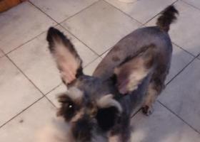 寻狗启示,6月9号在邯郸市科贸城内丢失,它是一只非常可爱的宠物狗狗,希望它早日回家,不要变成流浪狗。