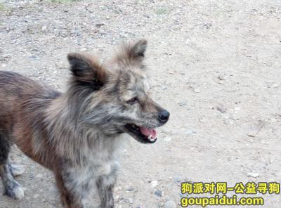 常德找狗,狗狗失踪很久了还是想找一下,它是一只非常可爱的宠物狗狗,希望它早日回家,不要变成流浪狗。