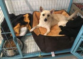寻狗启示,无锡锡山区东亭镇寻狗,母狗,它是一只非常可爱的宠物狗狗,希望它早日回家,不要变成流浪狗。
