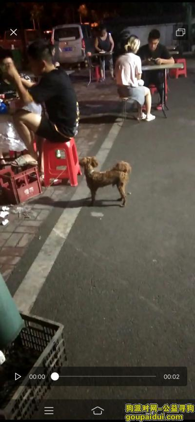 武汉寻狗主人,粽咖色 泰迪 毛被主人剪过 脖子有项圈 6月29就看见它流浪,它是一只非常可爱的宠物狗狗,希望它早日回家,不要变成流浪狗。