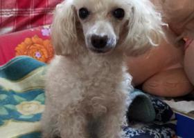 寻狗启示,狗丢了,急急急,坐标上海,它是一只非常可爱的宠物狗狗,希望它早日回家,不要变成流浪狗。