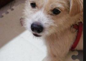 寻狗启示,急寻找爱狗多多(宝宝),它是一只非常可爱的宠物狗狗,希望它早日回家,不要变成流浪狗。