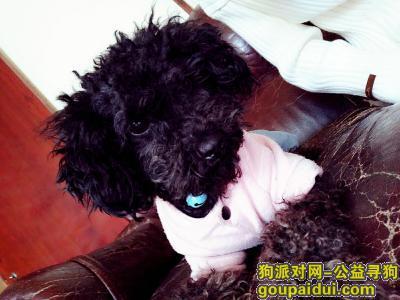 乐清找狗,寻狗启事,希望好心人帮帮忙,它是一只非常可爱的宠物狗狗,希望它早日回家,不要变成流浪狗。