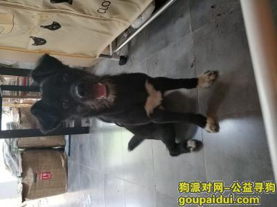 南京找狗主人,南京迈皋桥流浪狗寻失主,它是一只非常可爱的宠物狗狗,希望它早日回家,不要变成流浪狗。