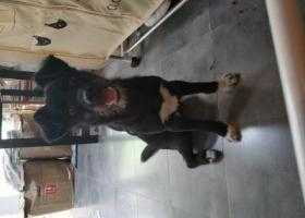 寻狗启示,南京迈皋桥流浪狗寻失主,它是一只非常可爱的宠物狗狗,希望它早日回家,不要变成流浪狗。