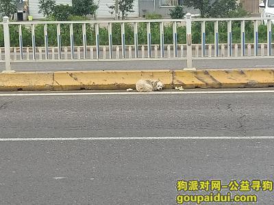 临沂找狗,河东区凤凰岭街道凤凰岭中学西,它是一只非常可爱的宠物狗狗,希望它早日回家,不要变成流浪狗。