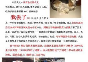 寻狗启示,北京通州亦庄凉水河马驹桥 寻走失比格犬,它是一只非常可爱的宠物狗狗,希望它早日回家,不要变成流浪狗。