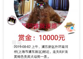 寻狗启示,狗狗在浦东新区三林镇外环走失,它是一只非常可爱的宠物狗狗,希望它早日回家,不要变成流浪狗。
