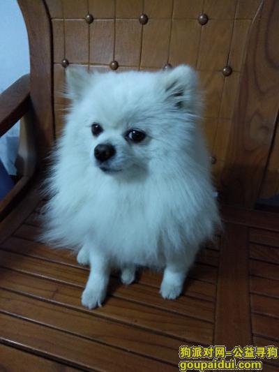 焦作丢狗,焦作中站区寻狗!重金答谢,它是一只非常可爱的宠物狗狗,希望它早日回家,不要变成流浪狗。