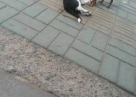 寻狗启示,宝贝lucky回家 重金酬谢好心人,它是一只非常可爱的宠物狗狗,希望它早日回家,不要变成流浪狗。