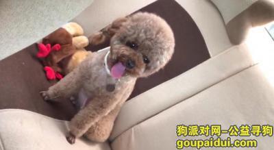 ,大厂回族自治县潮白河孔雀城英国宫1期南门,它是一只非常可爱的宠物狗狗,希望它早日回家,不要变成流浪狗。