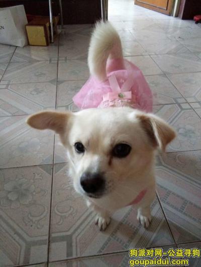 ,悬赏5000元 寻找日照师范岭2019.8.10走丢白色小狗一只,它是一只非常可爱的宠物狗狗,希望它早日回家,不要变成流浪狗。