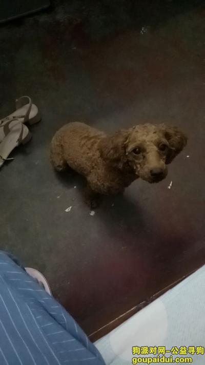 南充寻狗启示,在南充市川北医学院附近走丢,希望好心人捡到联系我,它是一只非常可爱的宠物狗狗,希望它早日回家,不要变成流浪狗。