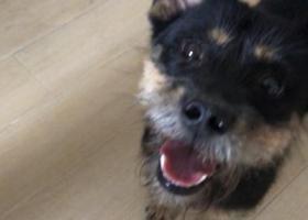 寻狗启示,南京市秦淮区三山街地铁站附近寻狗,它是一只非常可爱的宠物狗狗,希望它早日回家,不要变成流浪狗。