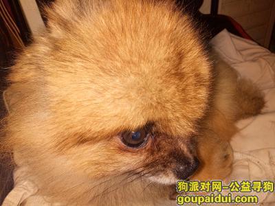 淮安寻狗,近日台风紧急寻狗清江浦区,它是一只非常可爱的宠物狗狗,希望它早日回家,不要变成流浪狗。