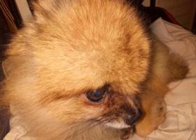 寻狗启示,近日台风紧急寻狗清江浦区,它是一只非常可爱的宠物狗狗,希望它早日回家,不要变成流浪狗。