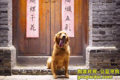 ,南通港闸区陶瓷交易市场丢失金毛犬,它是一只非常可爱的宠物狗狗,希望它早日回家,不要变成流浪狗。