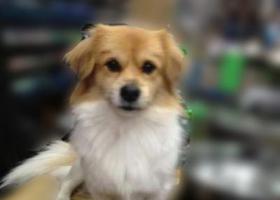 寻狗启示,【寻狗启事】急急急急,它是一只非常可爱的宠物狗狗,希望它早日回家,不要变成流浪狗。