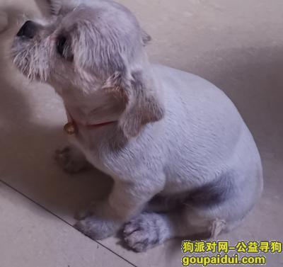 寻狗启示,寻找小白白狗狗的主人,它是一只非常可爱的宠物狗狗,希望它早日回家,不要变成流浪狗。