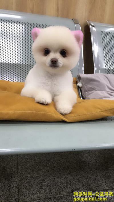 寻狗启示,自家养的小宝贝丢失,希望大家帮帮忙,它是一只非常可爱的宠物狗狗,希望它早日回家,不要变成流浪狗。