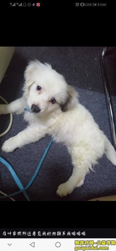 黄石寻狗网,我的狗在大冶叶家坝掉了看见了麻烦联系一下我呜呜呜 微信:qq1873663082,它是一只非常可爱的宠物狗狗,希望它早日回家,不要变成流浪狗。