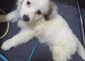 寻狗启示,我的狗在大冶叶家坝掉了看见了麻烦联系一下我呜呜呜 微信:qq1873663082,它是一只非常可爱的宠物狗狗,希望它早日回家,不要变成流浪狗。