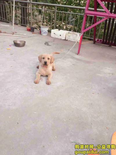 安阳寻狗启示,吐了具体咯五 图库她突突两下呃呃呃,它是一只非常可爱的宠物狗狗,希望它早日回家,不要变成流浪狗。