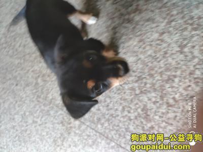 常州丢狗,有谁捡到它麻烦联系我,它是一只非常可爱的宠物狗狗,希望它早日回家,不要变成流浪狗。