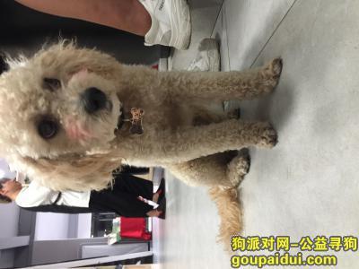 荆州找狗,乔治等你回家,它是一只非常可爱的宠物狗狗,希望它早日回家,不要变成流浪狗。