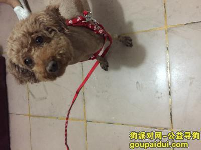 扬州捡到狗,寻找主人,一只可爱的小狗,它是一只非常可爱的宠物狗狗,希望它早日回家,不要变成流浪狗。