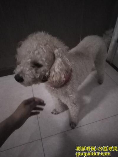 仙桃寻狗,乔治已经回家了,谢谢大家,它是一只非常可爱的宠物狗狗,希望它早日回家,不要变成流浪狗。