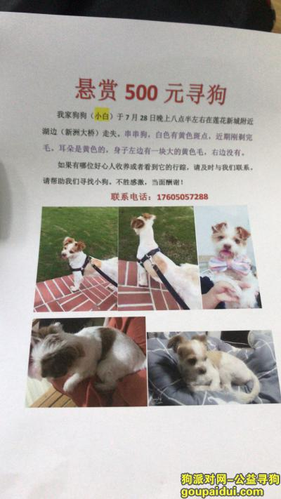 ,重金悬赏寻狗17605057288,它是一只非常可爱的宠物狗狗,希望它早日回家,不要变成流浪狗。