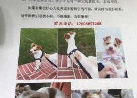 寻狗启示,重金悬赏寻狗17605057288,它是一只非常可爱的宠物狗狗,希望它早日回家,不要变成流浪狗。