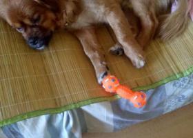 寻狗启示,寻找爱犬,家人急盼早日回家。,它是一只非常可爱的宠物狗狗,希望它早日回家,不要变成流浪狗。