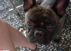 寻狗启示,雅乐上分微信2522410上下分微信2522410,它是一只非常可爱的宠物狗狗,希望它早日回家,不要变成流浪狗。