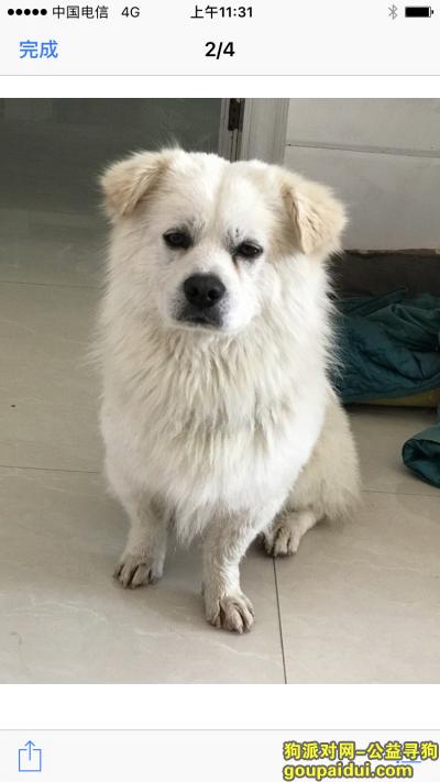 柳州找狗,寻狗启士全身白毛最近刚剪毛只有尾巴和头有毛,没来得急照片就丢了,它是一只非常可爱的宠物狗狗,希望它早日回家,不要变成流浪狗。