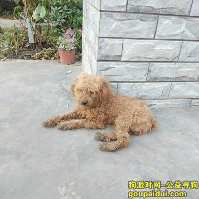 南通找狗,昨晚狗8点多没了,今天出去找了的还是没有找到,它名字叫萌萌。,它是一只非常可爱的宠物狗狗,希望它早日回家,不要变成流浪狗。