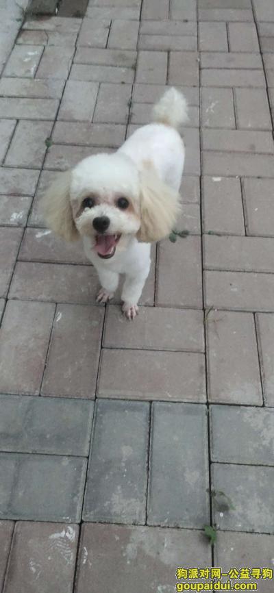 寻狗启示,跪求好心人帮我找到狗狗,它是一只非常可爱的宠物狗狗,希望它早日回家,不要变成流浪狗。