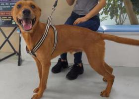 寻狗启示,于8月13日凌晨,永康江南街道王染店70幢附近,狗狗走失,它是一只非常可爱的宠物狗狗,希望它早日回家,不要变成流浪狗。