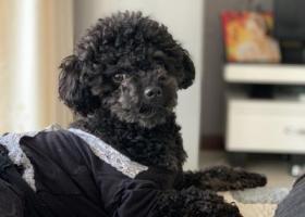 求好心人帮助!爱犬于2019年8月18日21点于兰州市城关区段家滩南河道欣欣茗园走失