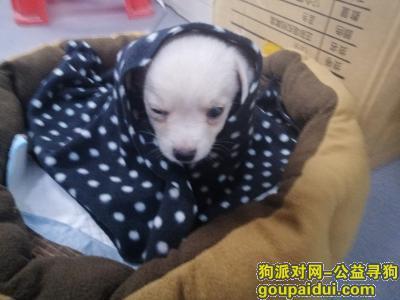 ,找幼犬麻烦好心人看到帮我留言一下,它是一只非常可爱的宠物狗狗,希望它早日回家,不要变成流浪狗。