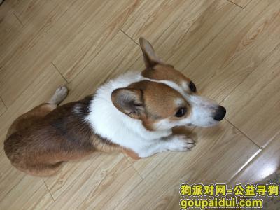 苏州找狗主人,捡到一只小型犬,它是一只非常可爱的宠物狗狗,希望它早日回家,不要变成流浪狗。