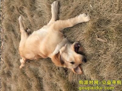 黄石寻狗启示,寻狗,狗狗于8.17在团城山玉龙湾小区丢失,它是一只非常可爱的宠物狗狗,希望它早日回家,不要变成流浪狗。