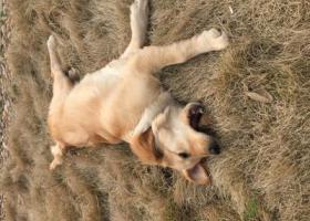 寻狗启示,寻狗,狗狗于8.17在团城山玉龙湾小区丢失,它是一只非常可爱的宠物狗狗,希望它早日回家,不要变成流浪狗。