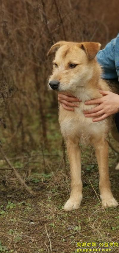 厦门找狗,集美区寻狗启示,大土狗,公,已绝育,它是一只非常可爱的宠物狗狗,希望它早日回家,不要变成流浪狗。