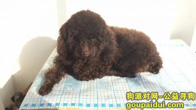 常德丢狗,寻找在国道318丢失的爱犬宝宝德芙,它是一只非常可爱的宠物狗狗,希望它早日回家,不要变成流浪狗。