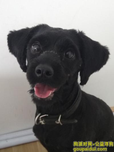 ,中山石岐岐港市场附近捡到一只黑狗,它是一只非常可爱的宠物狗狗,希望它早日回家,不要变成流浪狗。