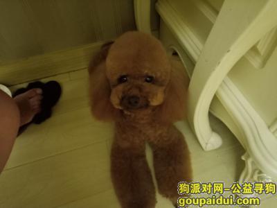 芜湖寻狗网,狗狗跟了我2年多。相当于我的亲人,它是一只非常可爱的宠物狗狗,希望它早日回家,不要变成流浪狗。
