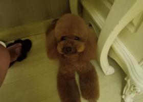 寻狗启示,狗狗跟了我2年多。相当于我的亲人,它是一只非常可爱的宠物狗狗,希望它早日回家,不要变成流浪狗。